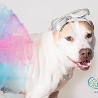 Adopt A Pet :: CHULA - Camarillo, CA