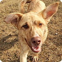 Adopt A Pet :: *Colton - PENDING - Westport, CT