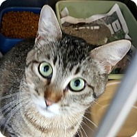 Adopt A Pet :: Snickers - Warrensburg, MO