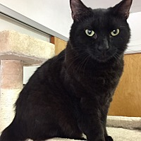 Adopt A Pet :: Rocky - hollywood, FL