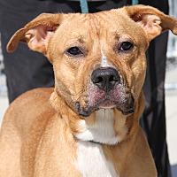 Adopt A Pet :: Nahko - Marietta, OH