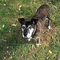 Adopt A Pet :: Beatrice - Sharon Center, OH