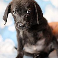 Adopt A Pet :: Winna - Waldorf, MD