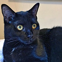 Adopt A Pet :: Myrcella - Mississauga, Ontario, ON