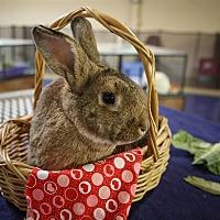 Adopt A Pet :: Izzy - Oceanside, CA