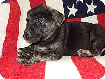 German Shepherd Dog Mix Dog for adoption in BLACKWELL, Oklahoma - KAYLIB