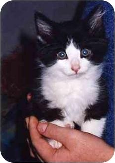 Domestic Longhair Cat for adoption in Owatonna, Minnesota - Elvis