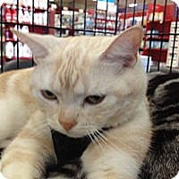 Adopt A Pet :: Brad - Beverly Hills, CA