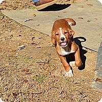Adopt A Pet :: Andes - New Boston, NH