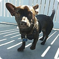 Adopt A Pet :: Logan - Los Angeles, CA