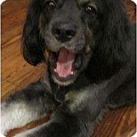 Adopt A Pet :: Hondo - Sugarland, TX