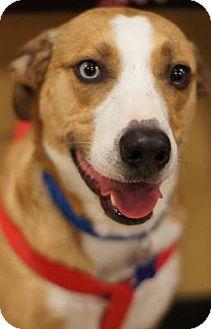 Husky Mix Dog for adoption in Toledo, Ohio - True