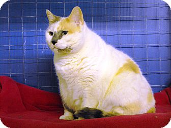 Domestic Shorthair Cat for adoption in Mission, British Columbia - June
