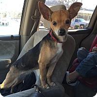 Adopt A Pet :: Jill - Nashville, TN
