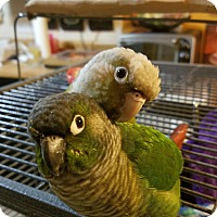 Adopt A Pet :: Bae & Jasper - St. Louis, MO