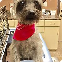 Adopt A Pet :: Aloha - Los Angeles, CA