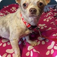 Adopt A Pet :: Rain - Kansas city, MO