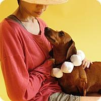 Adopt A Pet :: Petrie - Los Angeles, CA