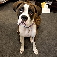 Adopt A Pet :: Available to Adopt - Molly - Waterford, MI