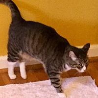 Adopt A Pet :: Sally Ann - Houston, TX