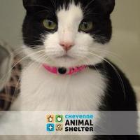 Adopt A Pet :: Peaches - Cheyenne, WY