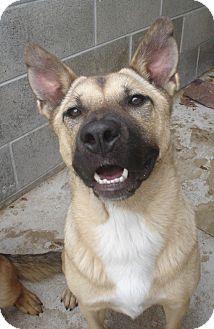German Shepherd Dog Mix Dog for adoption in Lake Odessa, Michigan - Victoria