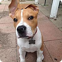 Adopt A Pet :: Tucker - Decatur, IL