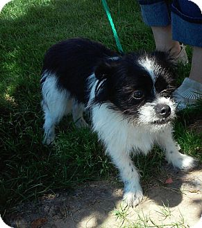 Terrier (Unknown Type, Small) Mix Dog for adoption in Meridian, Idaho - Marty