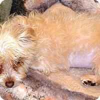 Adopt A Pet :: Sara - Simi Valley, CA