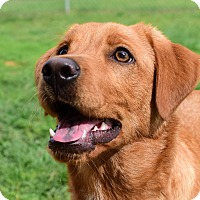 Adopt A Pet :: Twister - New Canaan, CT