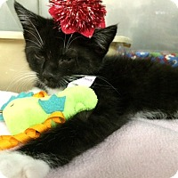 Adopt A Pet :: Jaden - Byron Center, MI