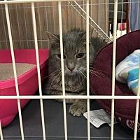 Adopt A Pet :: Minky - Westbury, NY
