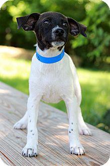 Labrador Retriever Mix Puppy for adoption in Waldorf, Maryland - Mougli