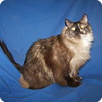 Adopt A Pet :: K-Fort Carson-Kiko - Colorado Springs, CO