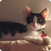 Adopt A Pet :: Trent - Los Angeles, CA