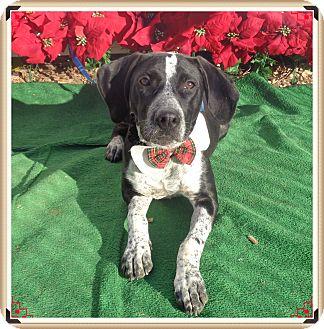 Pointer Mix Dog for adoption in Marietta, Georgia - MOOKIE
