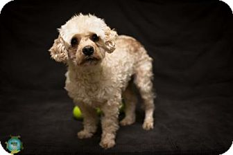 Terrier (Unknown Type, Medium) Mix Dog for adoption in Windsor, California - CK