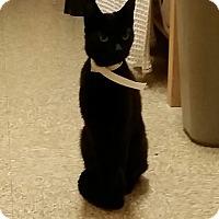 Adopt A Pet :: Branci (in CT) - East Hartford, CT