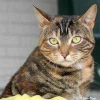 Adopt A Pet :: Tinker - Bedford, VA