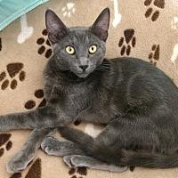 Adopt A Pet :: Nicky - Riverside, CA