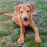 Adopt A Pet :: McDuffie-URGENT - Seabrook, NH