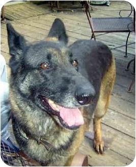 German Shepherd Dog Dog for adoption in Pike Road, Alabama - Lady