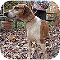 Adopt A Pet :: Zoe - Chesterfield, VA