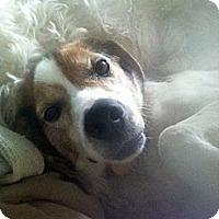 Adopt A Pet :: Fred Amelia - Waldorf, MD