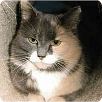 Adopt A Pet :: Hannah - Medway, MA