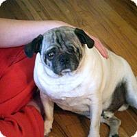 Adopt A Pet :: Harley - Eagle, ID