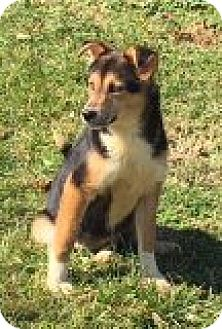 Shepherd (Unknown Type) Mix Dog for adoption in Breinigsville, Pennsylvania - Timber