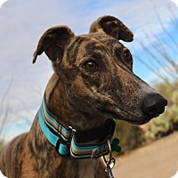 Adopt A Pet :: Flynn - Tucson, AZ