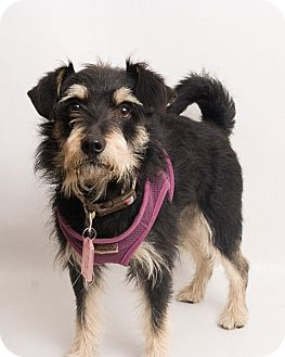 Terrier (Unknown Type, Medium) Mix Dog for adoption in Santa Cruz, California - Barkley