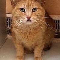 Adopt A Pet :: Sherbet - Port Clinton, OH